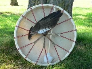tambour-aigle